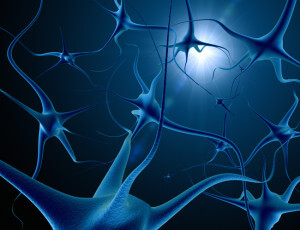 beynin-bolumleri