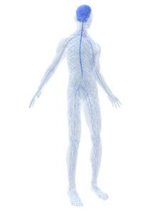 sinir sistemi hastalıkları